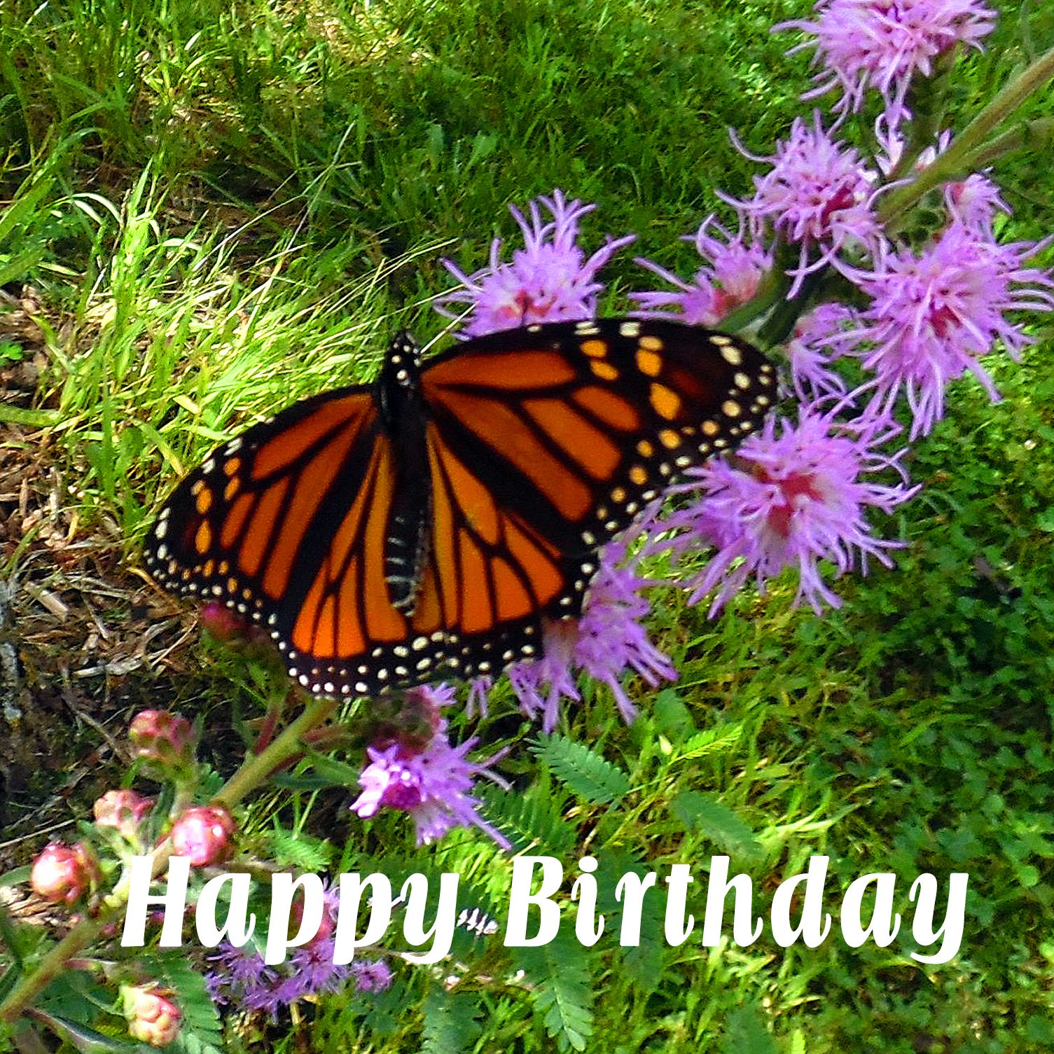 Happy Birthday Jimmy Wynn The Pecan Park Eagle Beautiful, free images gifted by the world's most generous community of photographers. happy birthday jimmy wynn the pecan